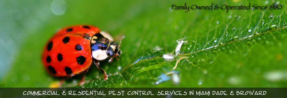 Best Pest Control Miami Florida